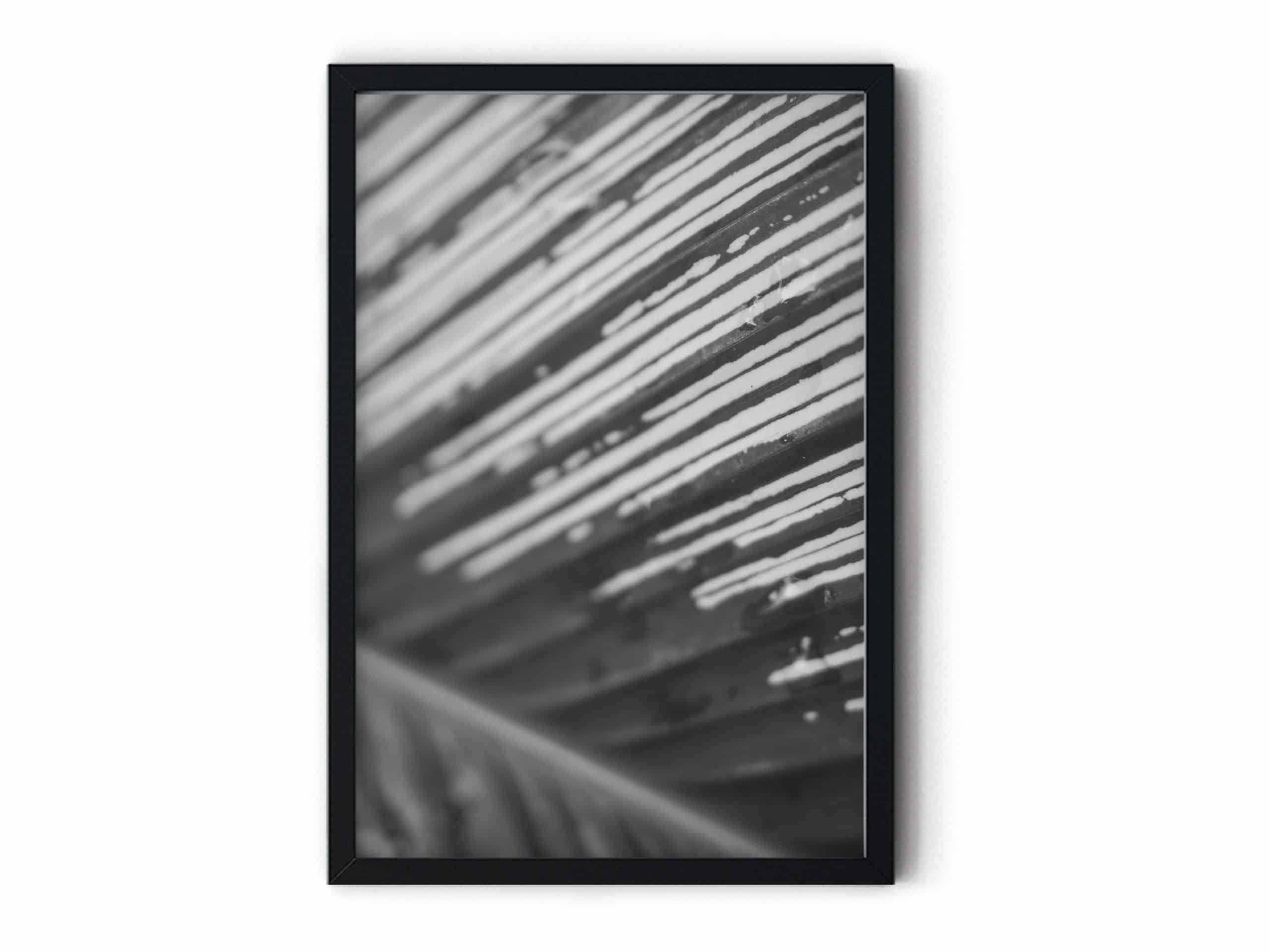 outdoor black and white Wall Art Prints Australia